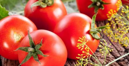 Tomato exports to Russia