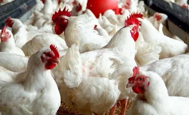 A brief note about poultry and ruminant markets in Turkey in 2017