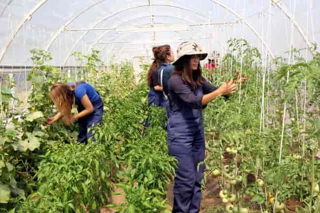 Izmir Municipality creates alternative model to replace imports in agriculture